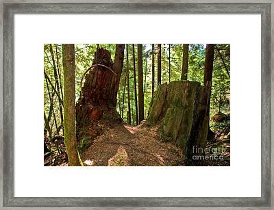 Capilano River Canyon 2 Framed Print by Terry Elniski