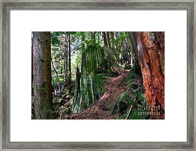 Capilano River Canyon 3 Framed Print by Terry Elniski