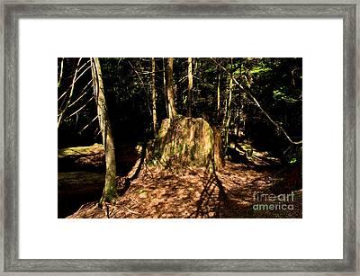 Capilano River Canyon 6 Framed Print by Terry Elniski