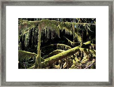 Capilano River Canyon 8 Framed Print by Terry Elniski