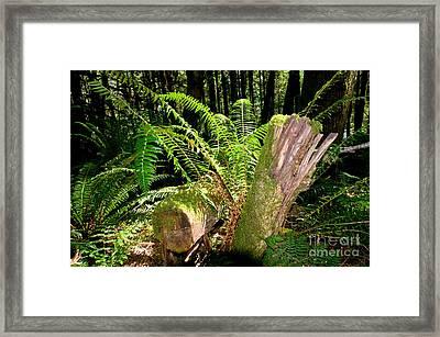 Capilano Rivercanyon 9 Framed Print by Terry Elniski