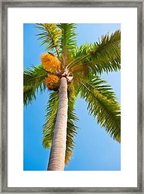 Capistrano Palm Tree - Digital Photo Art Framed Print