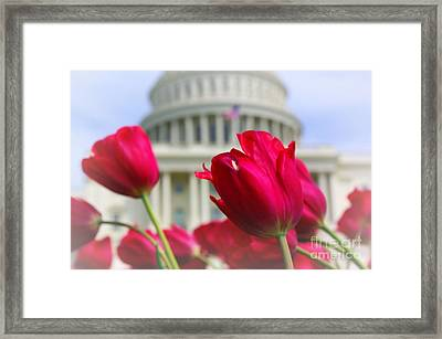Framed Print featuring the photograph Capital Flowers  by John S