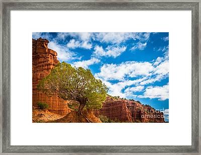 Caprock Canyon Tree Framed Print by Inge Johnsson