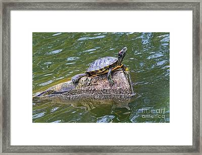 Captain Turtle Framed Print