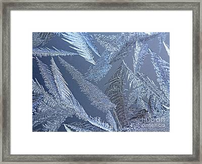 Captivated By Frost- Canada's Polar Chill Framed Print by Inspired Nature Photography Fine Art Photography