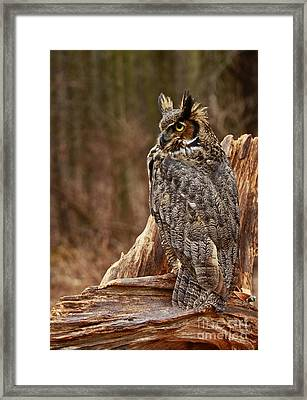 Captivated By Raptors Great Horned Owl In The Forest Framed Print by Inspired Nature Photography Fine Art Photography