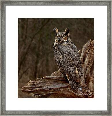 Captivated By The Great Horned Owl Framed Print