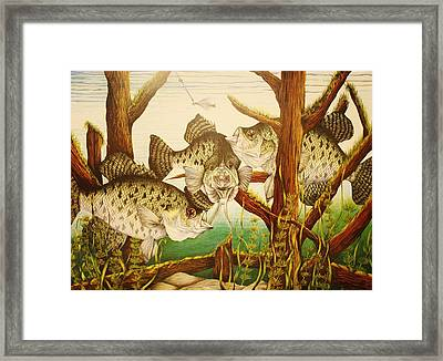 Captivating Crappies Framed Print by Bruce Bley