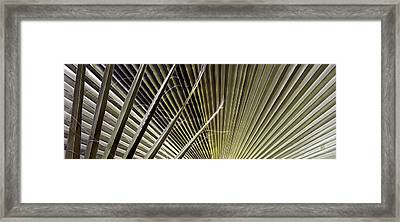 Captivation - Palm Leaf Framed Print