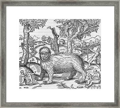 Captive Sloth, 16th Century Framed Print by Science Photo Library