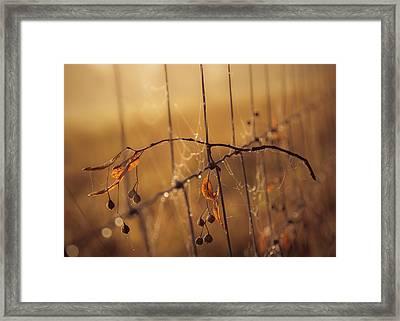 Captured Framed Print by Chris Fletcher