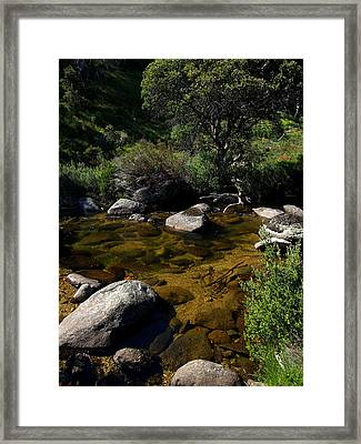 Captured Clarity Framed Print by Kaleidoscopik Photography