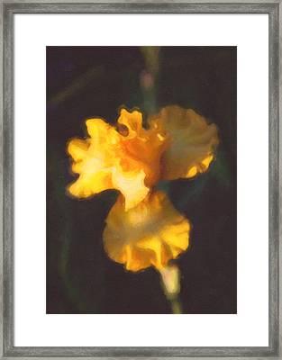 Capturing Sunshine  Framed Print by Omaste Witkowski