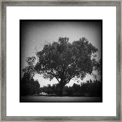Car Parked Under A Tree Framed Print by Marco Oliveira