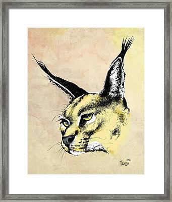 caracal Color Framed Print