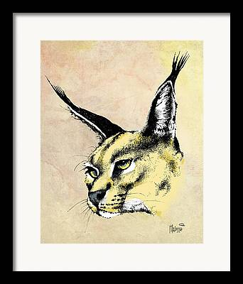 Pen And Ink Lynx Drawings Framed Prints