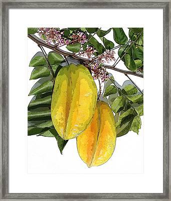 Carambolas Starfruit Two Up Framed Print by Olivia Novak