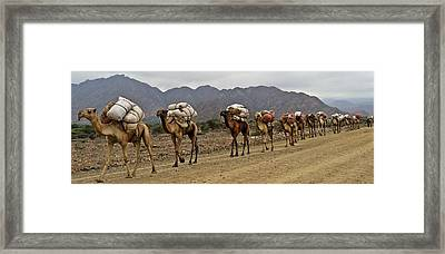 Caravan In The Desert Framed Print by Liudmila Di