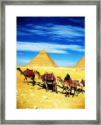 Caravan Of Camels 2 Framed Print by Alison Tomich