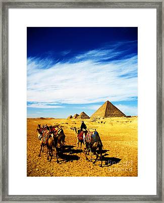 Caravan Of Camels Framed Print by Alison Tomich