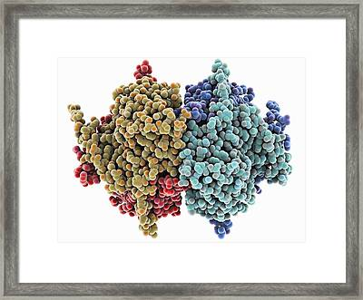 Carbamoylsarcosine Amidase Enzyme Framed Print by Science Photo Library