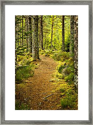 Framed Print featuring the photograph Carbisdale Path Scotland by Sally Ross
