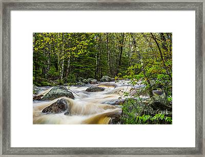 Card Mill Stream In Spring Framed Print by Susan Cole Kelly