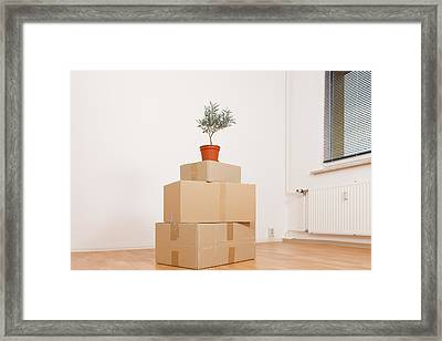 Cardboard Boxes And Pot Plant Framed Print by Wladimir Bulgar
