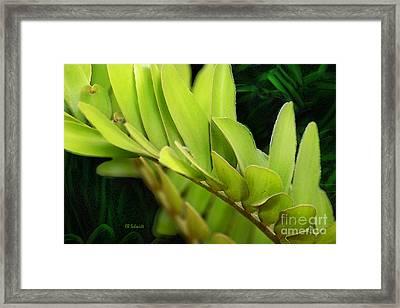 Cardboard Palm Framed Print by E B Schmidt