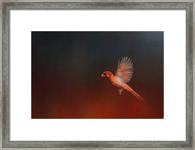 Cardinal 1 - I Wish I Could Fly Series Framed Print by Jai Johnson