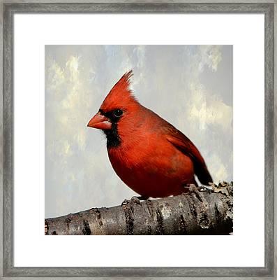 Cardinal 3 Framed Print