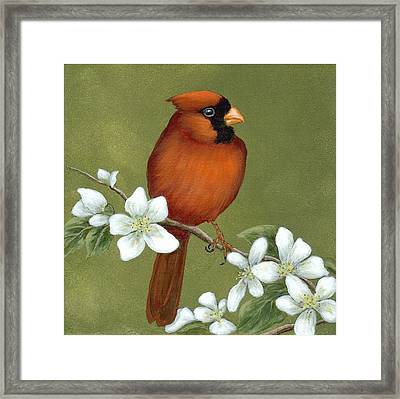 Cardinal And Dogwood Framed Print