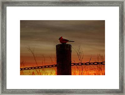 Cardinal At Sunset Framed Print by Larry Trupp