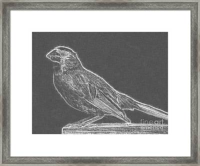 Cardinal Bird Glowing Charcoal Sketch Framed Print by Celestial Images
