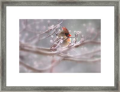 Cardinal - Bird - Lady In The Rain Framed Print by Travis Truelove