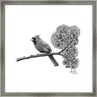 Cardinal Bird On Branch Framed Print