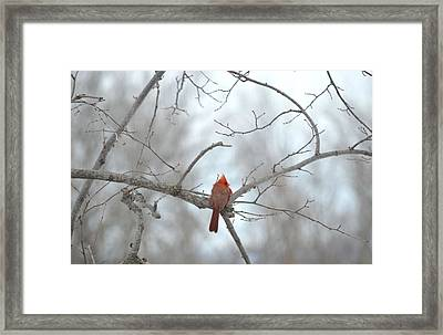 Framed Print featuring the photograph Cardinal Delight by Dacia Doroff