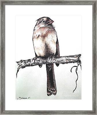 Cardinal Female Framed Print by Katharina Filus