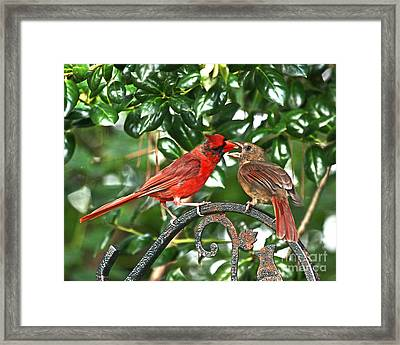 Cardinal Gift Of Love Photo Framed Print