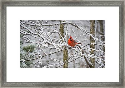 Cardinal In Snow Framed Print