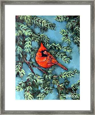 Cardinal In Spruce Framed Print by Inese Poga