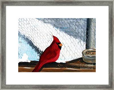 Cardinal In The Dogpound Framed Print by Barbara Griffin
