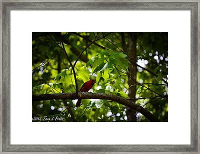 Cardinal In The Trees Framed Print by Tara Potts