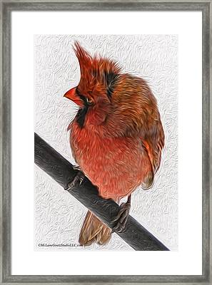 Cardinal In The Wind Framed Print