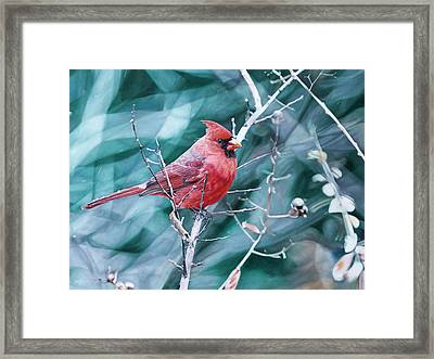 Cardinal In Winter Framed Print by Joshua Martin