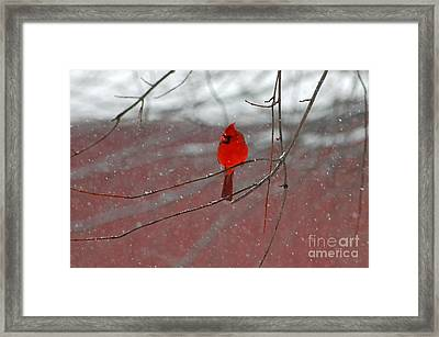 Framed Print featuring the photograph Cardinal In Winter by Olivia Hardwicke