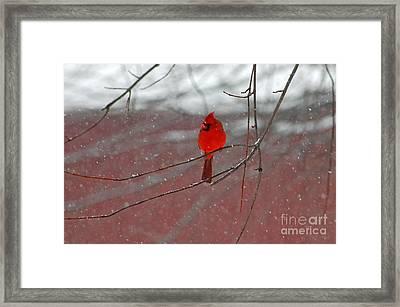 Cardinal In Winter Framed Print by Olivia Hardwicke