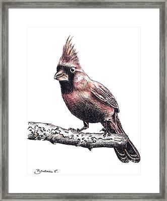 Cardinal Male Framed Print by Katharina Filus