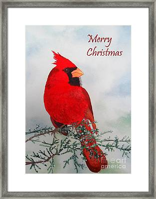 Cardinal Merry Christmas Framed Print